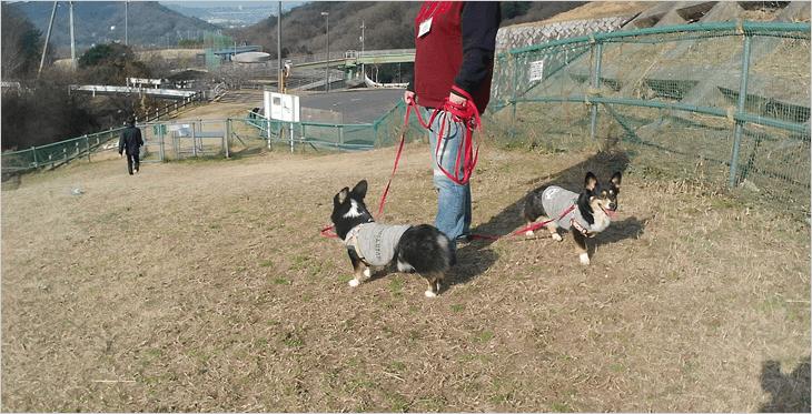海田総合公園ドックラン